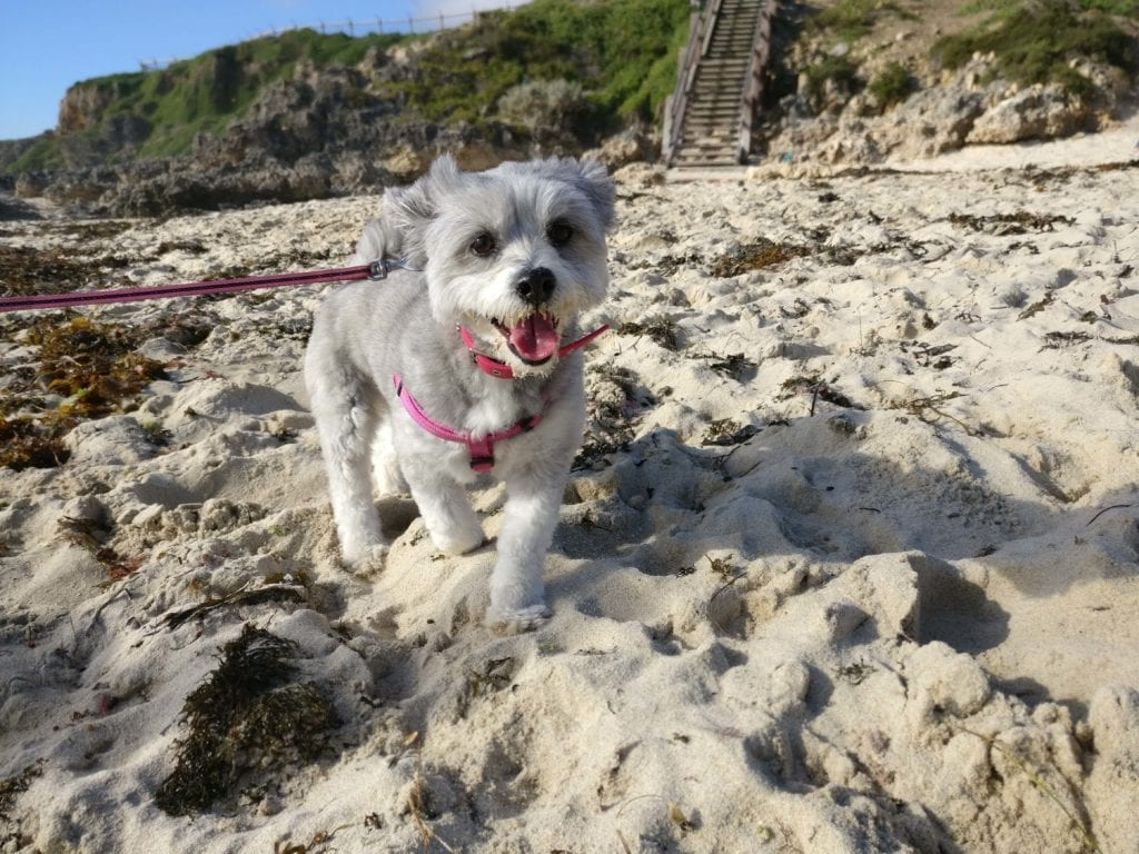 perth Best Dog Beaches